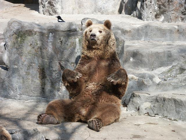 귀찮은 곰